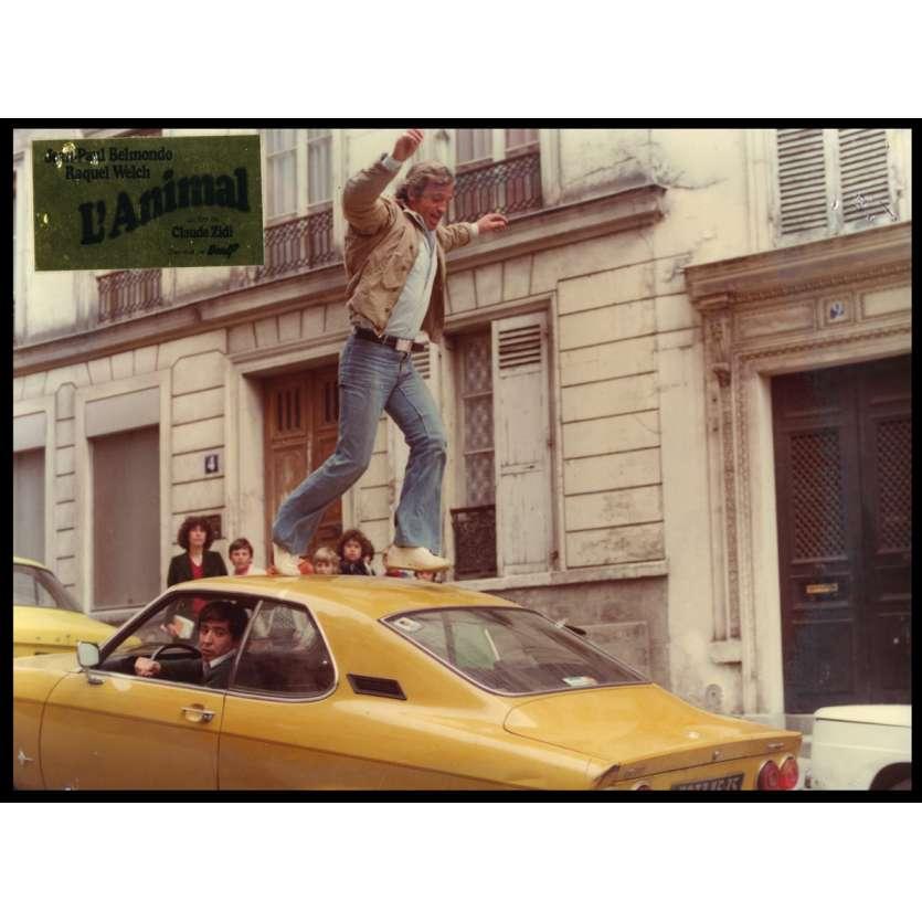L'ANIMAL Photo de film DeLuxe N2 24x30 - 1977 - Jean-Paul Belmondo, Claude Zidi
