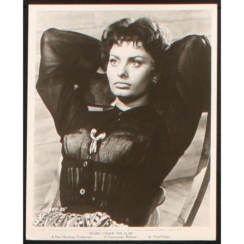 DESIRE SOUS LES ORMES Photo de presse 20x25 - 1958 - Sophia Loren, Delbert Mann