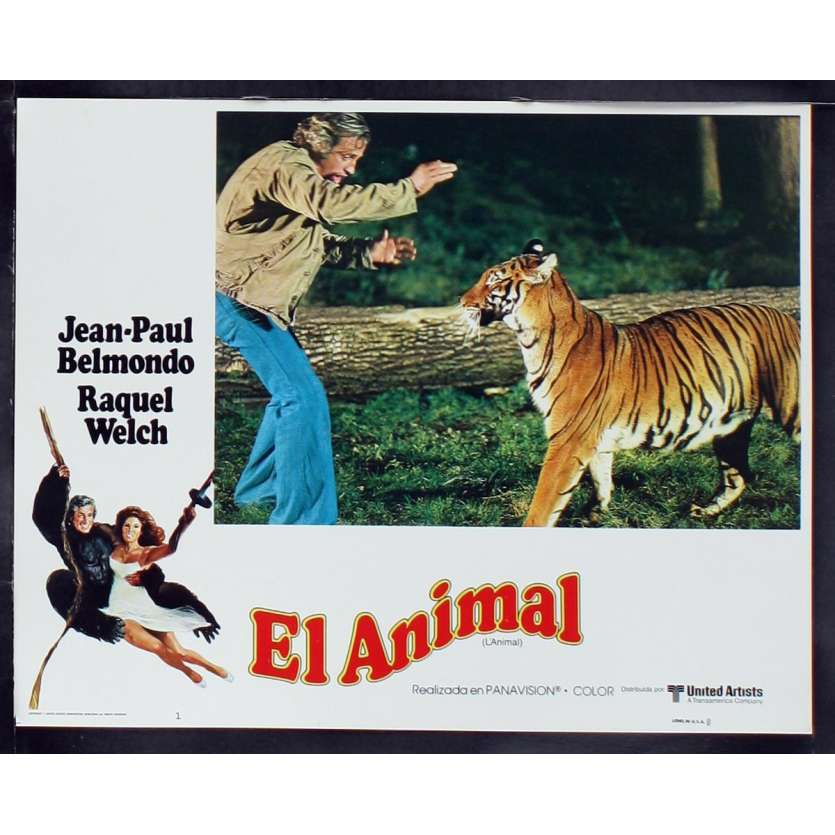 ANIMAL US Lobby Card 8 11x14 - 1977 - Claude Zidi, Jean-Paul Belmondo