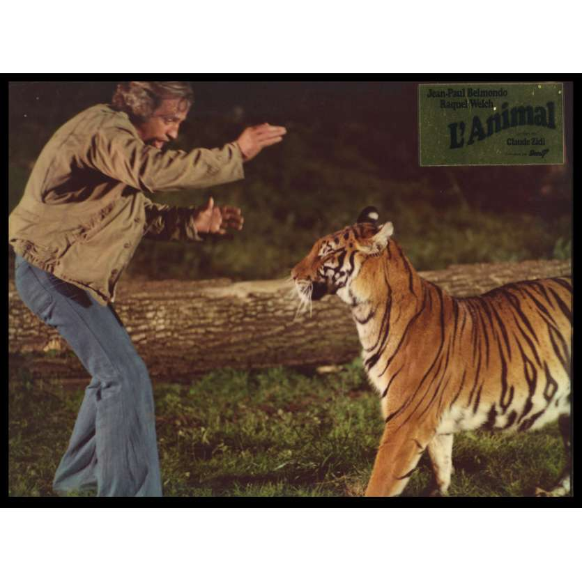 L'ANIMAL Photo de film DeLuxe N4 24x30 - 1977 - Jean-Paul Belmondo, Claude Zidi