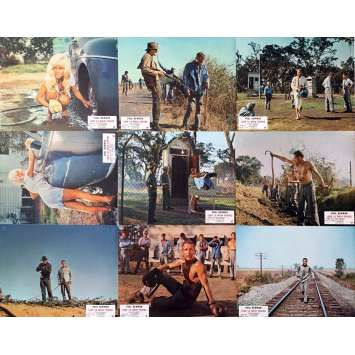 COOL HAND LUKE Lobby Cards x9 - 9x12 in. - 1967 - Stuart Rosenberg, Paul Newman