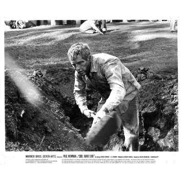 COOL HAND LUKE Original Movie Still N21 - 8x10 in. - 1967 - Stuart Rosenberg, Paul Newman